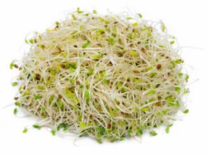 brokkoli-sprossen
